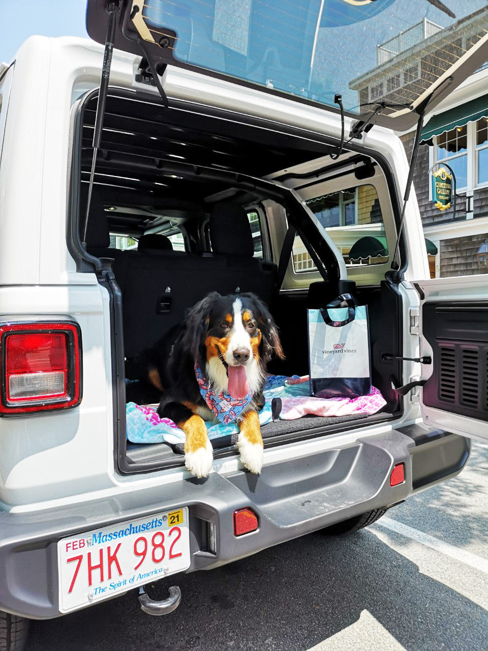 A Day Trip To Martha's Vineyard With Our Dog Ivy