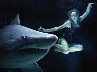 Quel matériau pour le calcul du requin griffon?