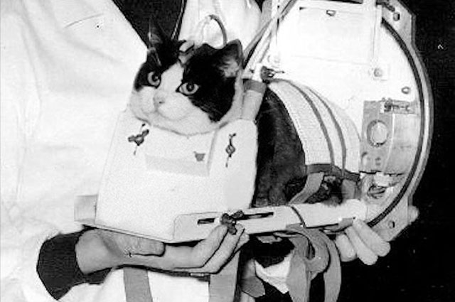 Kucing Felicette ke luar angkasa