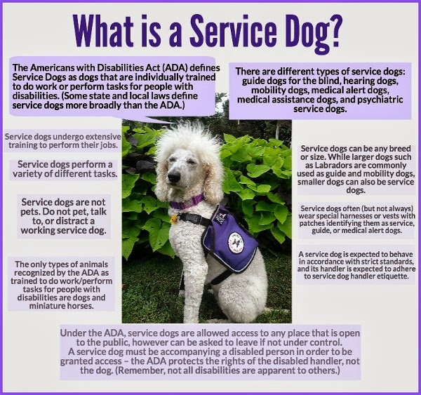 What is a #ServiceDog Infographic by Carmapoodale.com