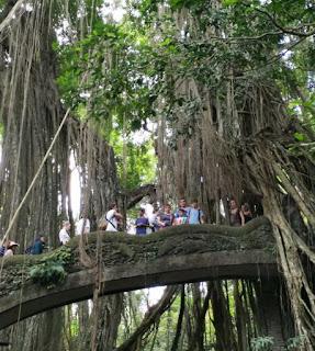 Monkey Forest de Ubud, Isla de Bali, Indonesia.