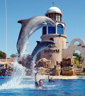 Imagen de espectaculo de delfines