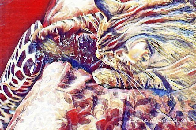 Watercolor art LunaPic