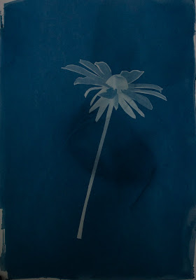 A cyanotype image of a sunflower and a blurb about Chris Farley.