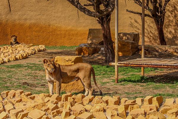 أفضل 5 أنشطة في حديقة الحيوانات بالرياض 2021 روائع السفر