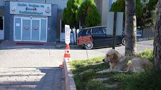 """""""وفاء كلب""""..ينتظر صاحبه التركي المريض أمام المستشفى منذ 5 أيام(فيديو)"""