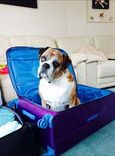 5 Dogs, 5 Suitcases—a Style Guide for Traveling Dogs