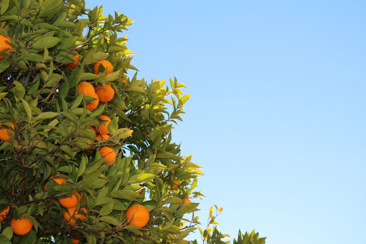 Oranges - Foto: © Benjamin Madeira / RUL2C/Instagram