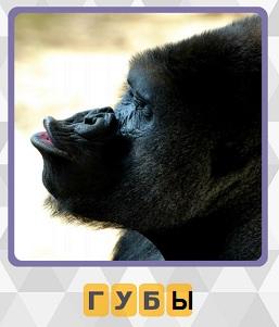 600 слов обезьяна вытянула свои губы 11 уровень