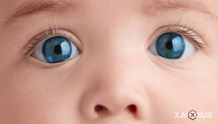 Fakta 3 - Wajah janin 24 minggu mendekati sempurna