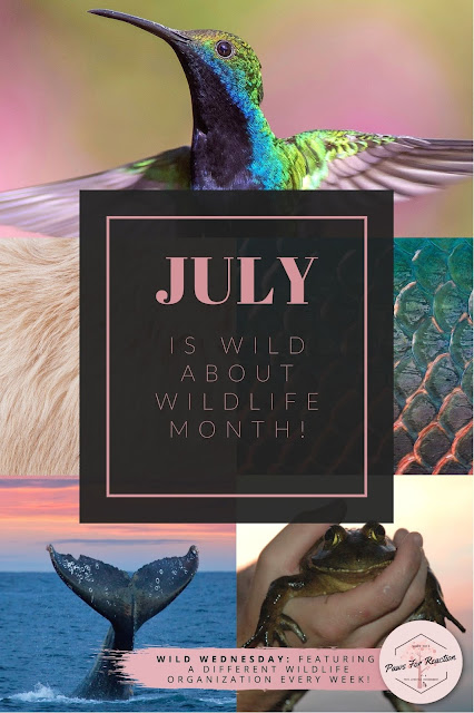 July is Wild About Wildlife Month: Wild Wednesday celebrates local wildlife conservation