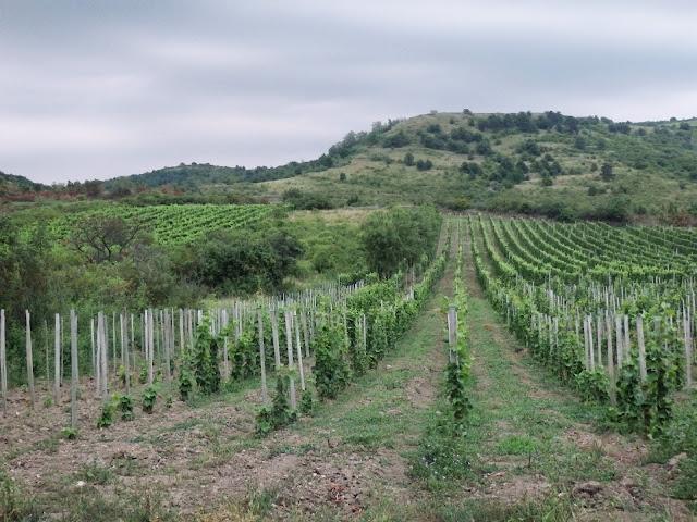 Węgierskie winnice - Góry Zemplińskie (czy jak kto woli, Tokajskie)