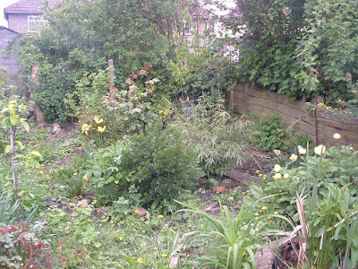 Photo of a garden bed with various shrubs and flowers and a ground cover of weeds