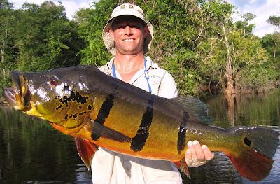 Ikan Pbass ( Peacock Bass )