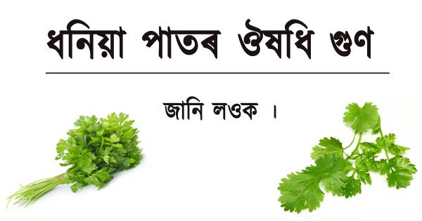 Benefits of Coriander Leaves in Assamese