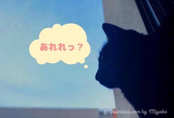 黒い猫が窓際に座って空を眺める様子
