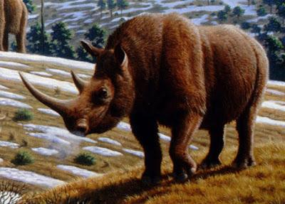 Coelodonta-Antiguitatis-era-da-familia-dos-rinocerontes-e-hoje-está-extinto