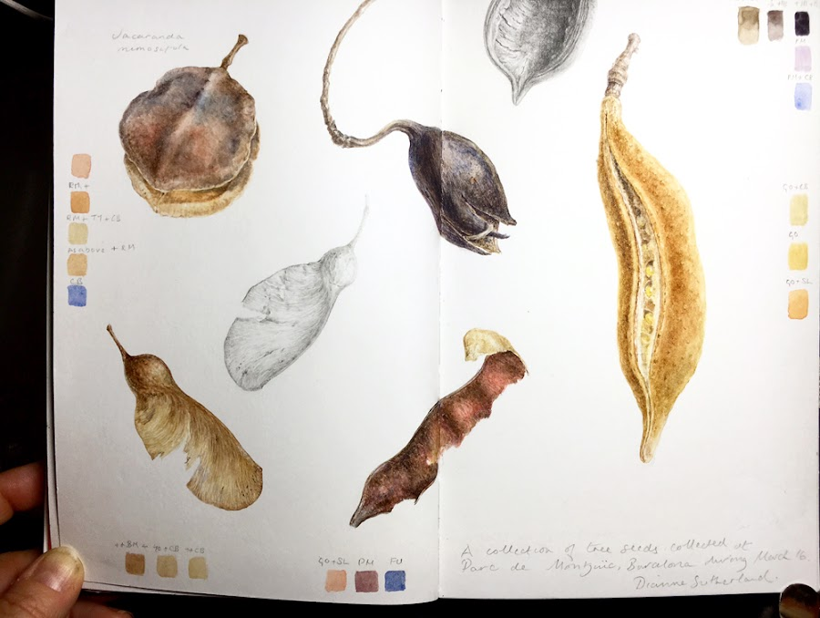 Seed pod sketchbook painting