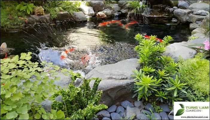 thiết kế hồ cá koi, hồ cá koi ngoài trời đẹp