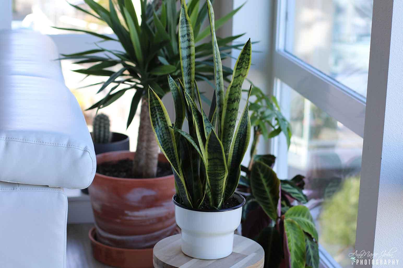 7 Best Houseplants for Beginners