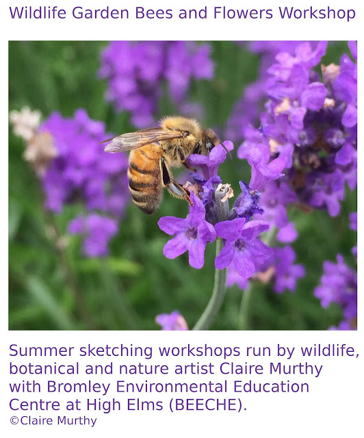 Wildlife Garden Bees and Flowers. Nature art workshops. London. Kent.