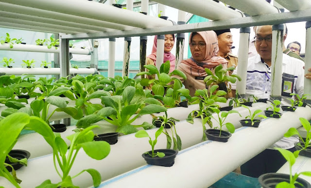 5 Teknik Budidaya Tanaman Hidroponik Tanpa Greenhouse Hemat Biaya