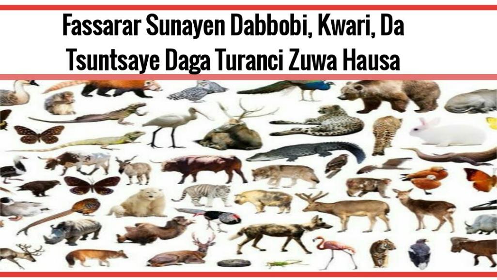 Fassarar Sunayen Dabbobi, Kwari, Da Tsuntsaye Daga Turanci Zuwa Hausa