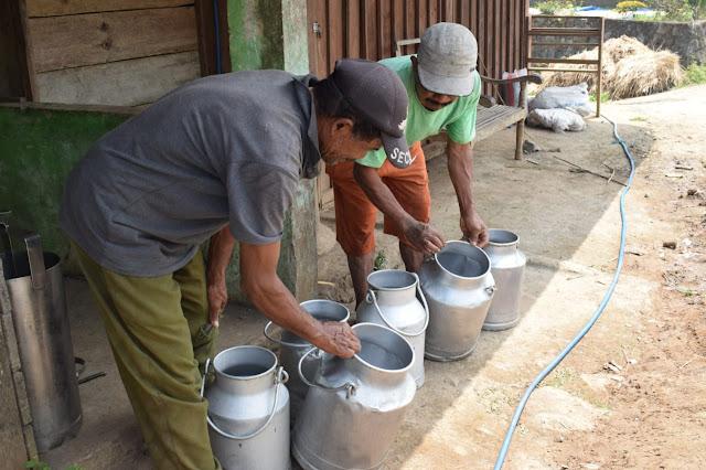 Penjual Susu Sapi Perah Turut Rasakan Dampak TMMD