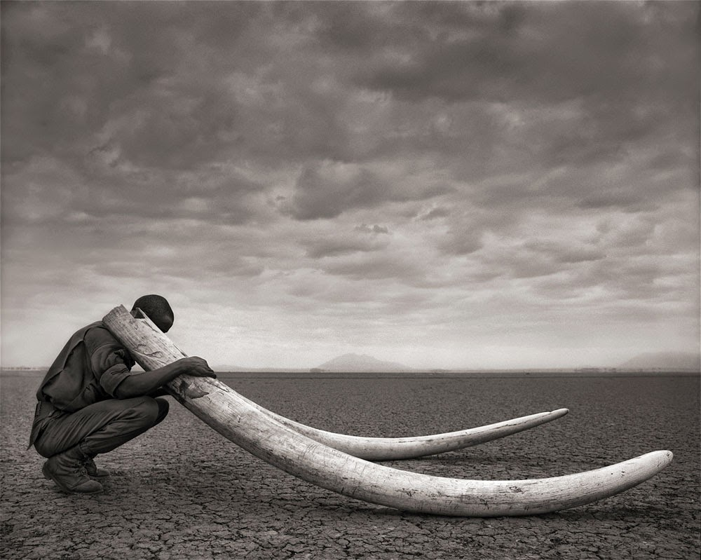 Nick Brandt, Across the ravaged land