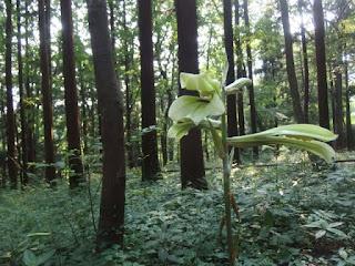 林の中で、開花中