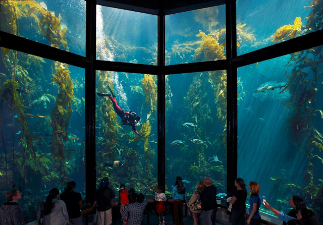 Visitantes no Aquarium of the Bay em San Francisco