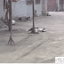 CARABAYLLO: ENVENENAN A 8 PERROS PARA ROBAR EN VIVIENDAS