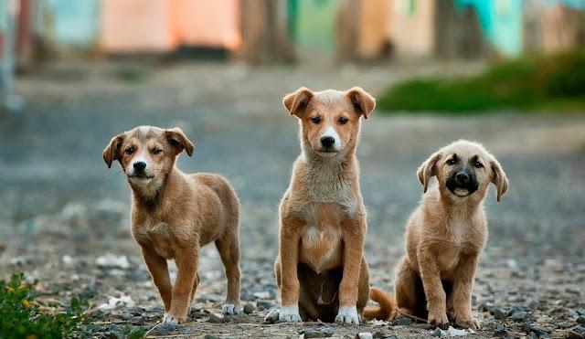 Χρηματοδότηση στους δήμους για την κατασκευή καταφυγίων αδέσποτων ζώων ή για την αναβάθμιση ήδη υφιστάμενων χώρων