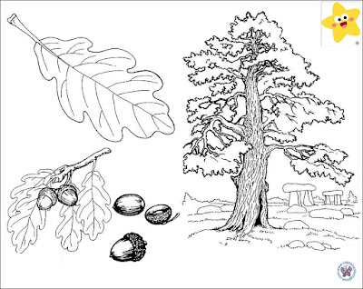 coloring pages acorn