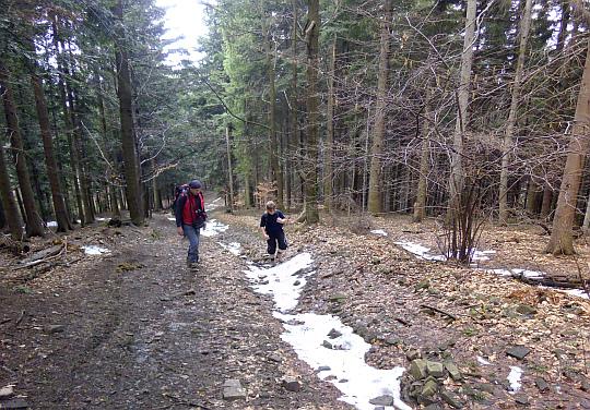 Leśna droga na Rogaczu.