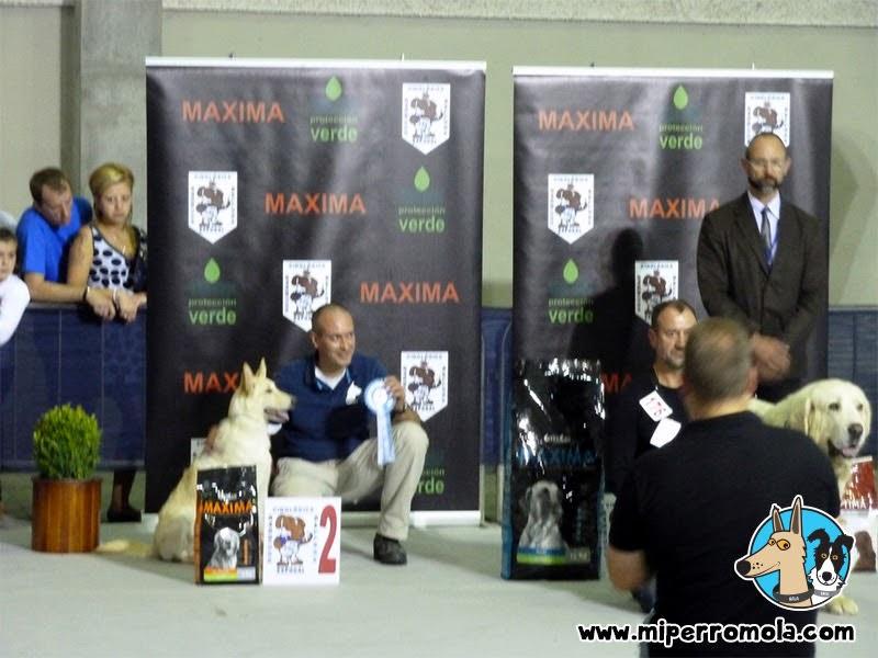 Can de Palleiro posando para el segundo lugar en el San Froilan Dog Show