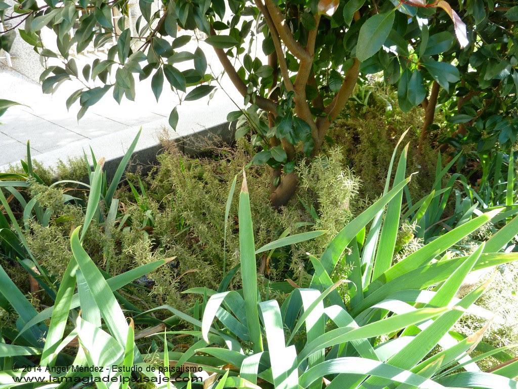 Jardinería de bajo mantenimiento