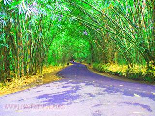 Inilah 8 Tempat Wisata Hutan Bambu Di Bali