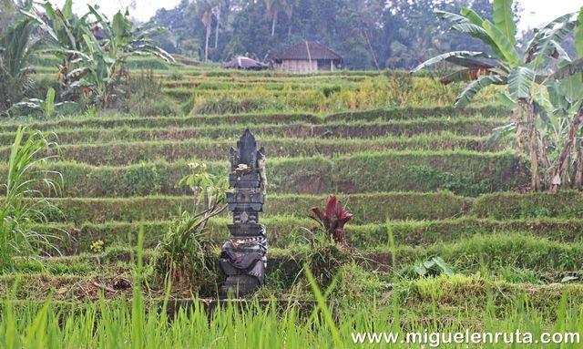 Terrazas-Jatiluwih-Bali