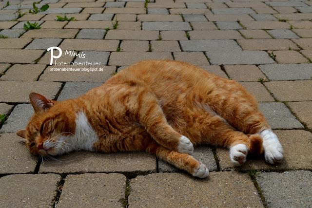 Katze Mimi schläft auf dem Pflaster im Garten