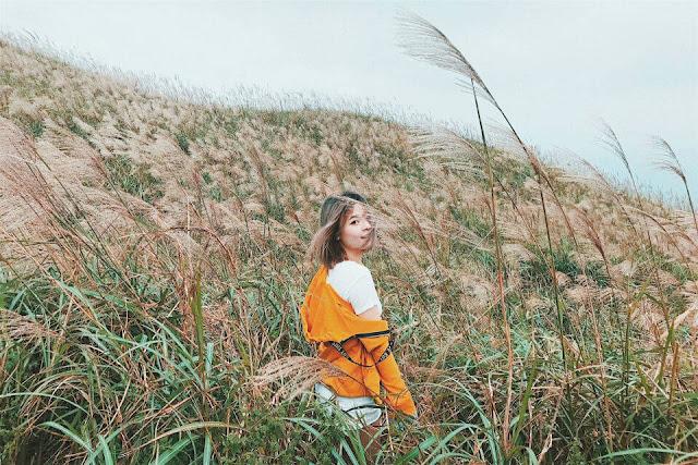 Cánh đồng Cỏ lau, Quảng Ninh