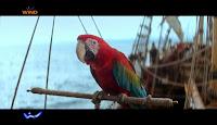 pappagallo ara - Wind All Inclusive Summer Edition