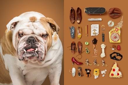 A Dog´s Life von Alicia Rius | Ganz besondere Hundeportraits zeigen die wahre Identität der Tiere auf