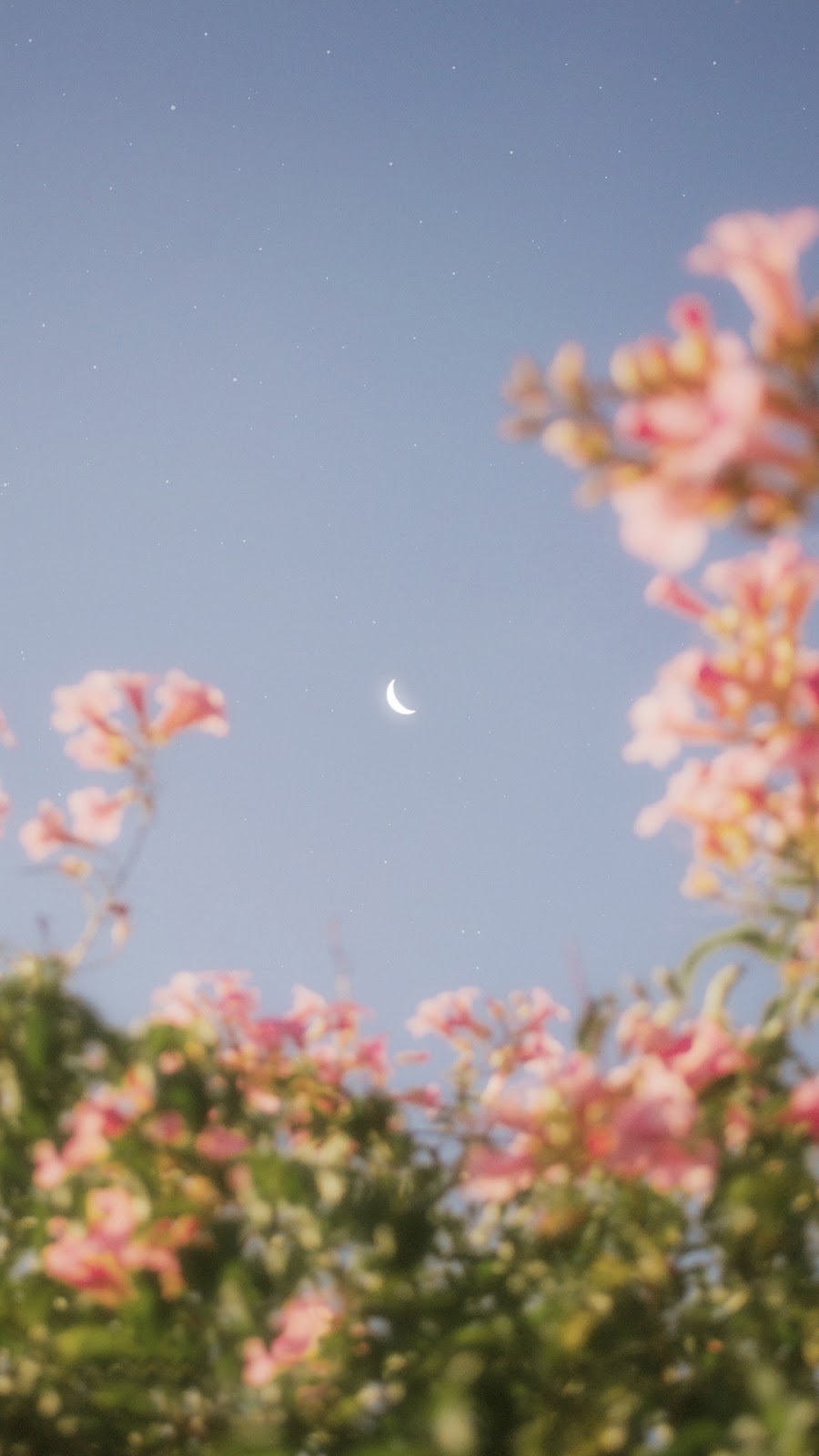 Hoa giữa bầu trời