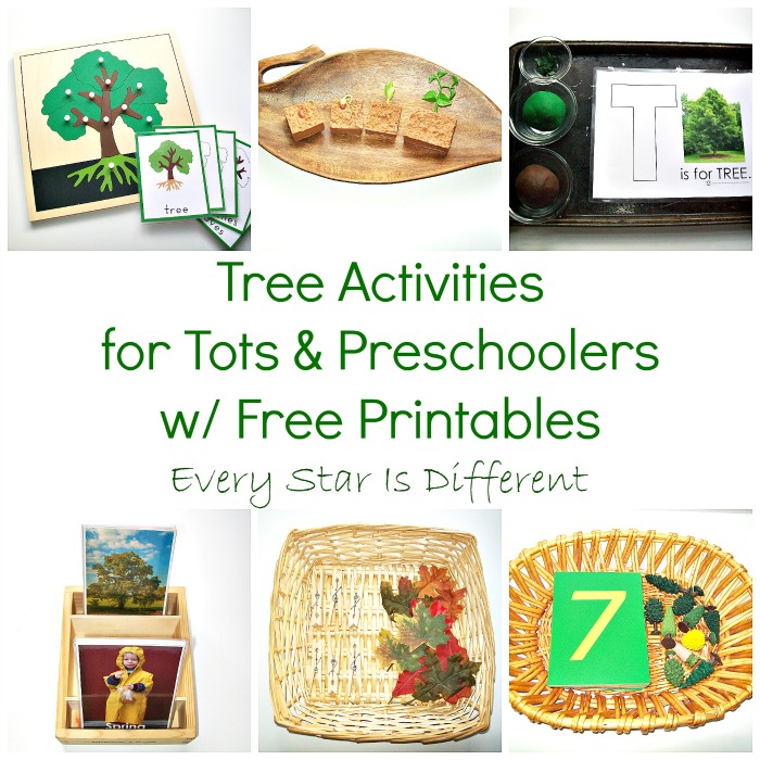 Tree Activities for Tots and Preschoolers