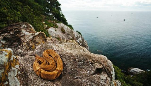Pulau Paling Berbahaya Untuk Dihuni