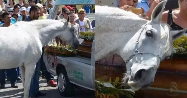 Horse Had An Emotional Breakdown After Smelling And Hugging Its Late Owner's Casket