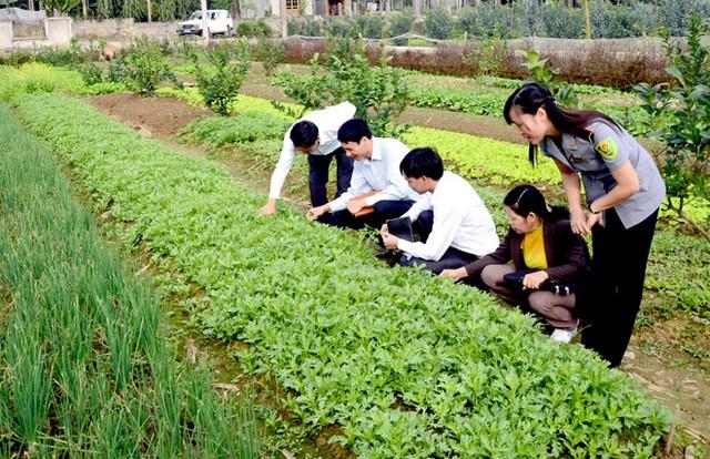 Cơ hội việc làm của sinh viên sau khi tốt nghiệp ngành Bảo vệ thực vật