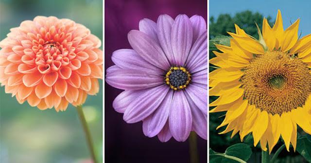 Выберите цветок и узнайте что-то новое о своих чувствах!