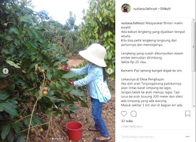 Alamat Wisata Kebun Lengkeng/kelengkeng Bintan